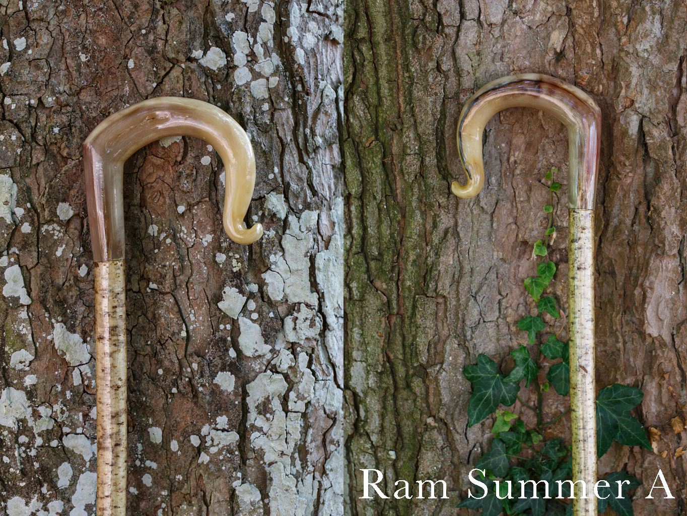 Rams Horn Crook Summer A