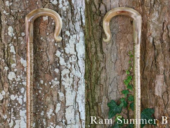 B Ram Summer