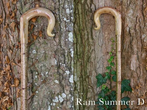 D Ram Summer